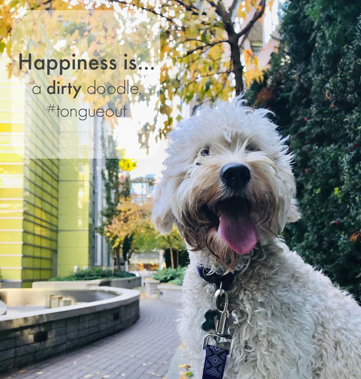 happiness-doodle-pup
